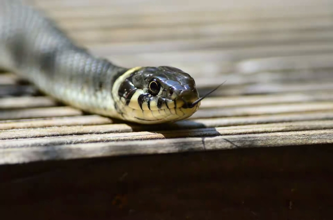 Mysterious snake swallows N36 million at JAMB office